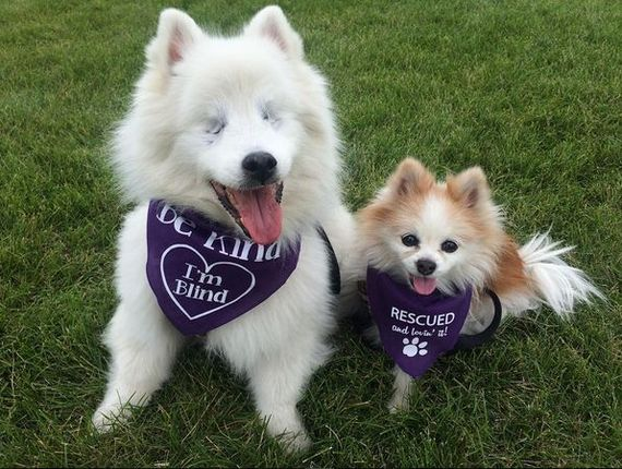 �������� �������. The Fluffy Duo, instagram, dog rescue dog, ����������, ������, ��������