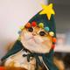 Аватар пользователя lioneyalan
