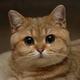 Аватар пользователя Asteinky