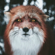 Аватар пользователя redcheshire