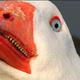 Аватар пользователя camellol