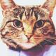 Аватар пользователя neo0071