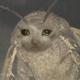 Аватар пользователя RaccoonPorn