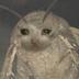 RaccoonPorn