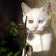 Аватар пользователя ozzman