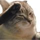 Аватар пользователя isopod
