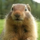 Аватар пользователя Suslyatina
