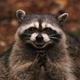 Аватар пользователя I.am.Drake