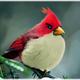 Аватар пользователя pikpikapikabu