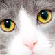 Аватар пользователя Linea