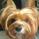 Аватар пользователя Vatomoura