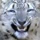 Аватар пользователя Pelegko