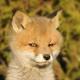 Аватар пользователя ArtyomPetrukhnov