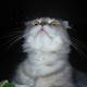 Аватар пользователя Z1gl