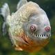 Аватар пользователя tulus