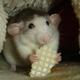 Аватар пользователя ratster