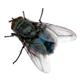 Аватар пользователя h1end0ff