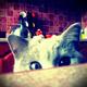 Аватар пользователя juliafeb
