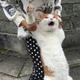 Аватар пользователя Daniksemen