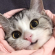 Аватар пользователя tumen31