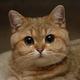 Аватар пользователя TiVI