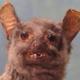 Аватар пользователя OdinHex