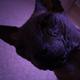 Аватар пользователя Kiekei