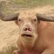 Аватар пользователя RakSoDna