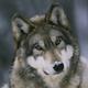 Аватар пользователя GreyWulf