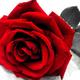 Аватар пользователя Blackvswhite