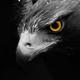 Аватар пользователя Boelas