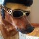 Аватар пользователя Pussi