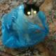Аватар пользователя SochnayaSonya