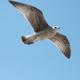 Аватар пользователя tarik616