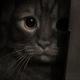 Аватар пользователя ZZZo