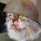 Аватар пользователя Dominator1990