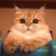 Аватар пользователя mihalychnext
