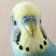 Аватар пользователя captaindib