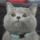 Аватар пользователя Jokke