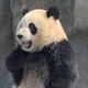 Аватар пользователя Juvefan96