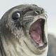 Аватар пользователя iZorch