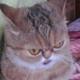 Аватар пользователя Naantarra