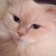 Аватар пользователя YoshKa