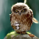 Аватар пользователя PomaCbI4