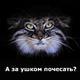 Аватар пользователя Butinic