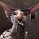 Аватар пользователя VoodooCat