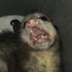 Аватар пользователя mrmicrobius