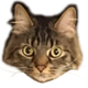 Аватар пользователя NNuPavlik