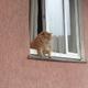 Аватар пользователя yukakamen