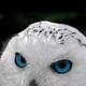 Аватар пользователя ASneg